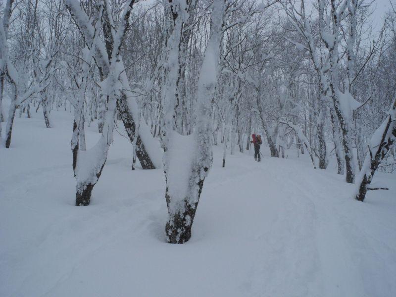 sous bois sculté par la neige